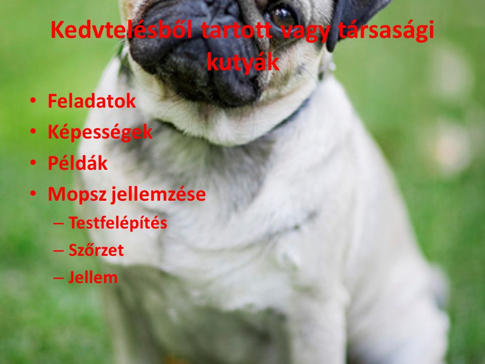 Kedvtelésből tartott vagy társasági kutyák