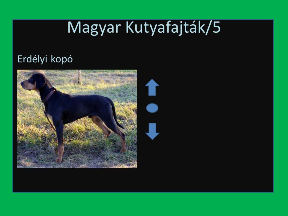 Magyar Kutyafajták/5 Erdélyi kopó