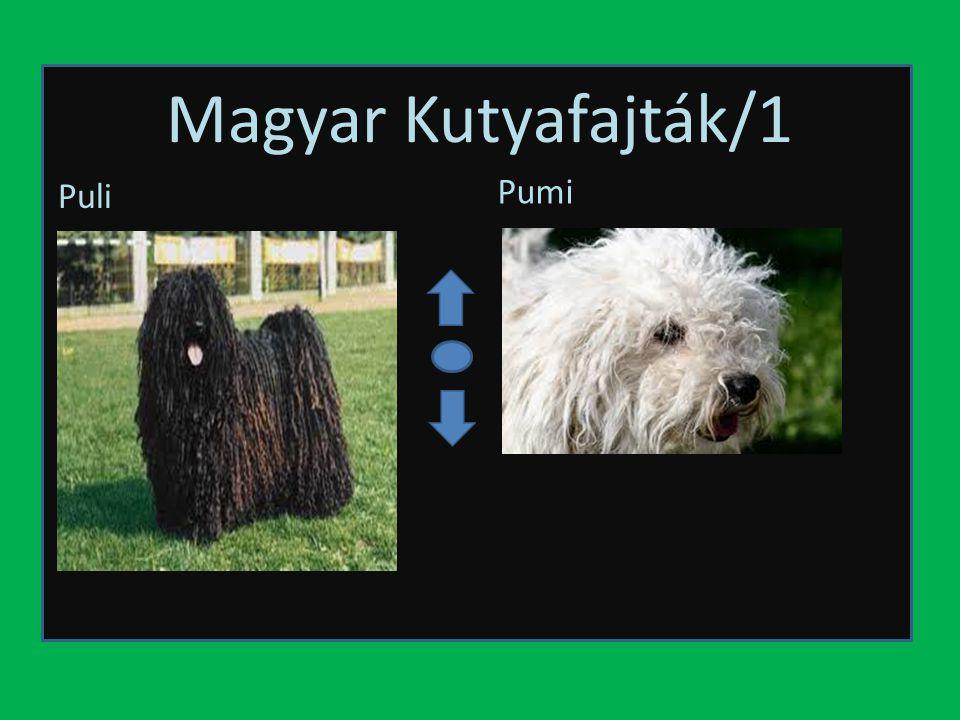 Magyar Kutyafajták/1 Puli Pumi