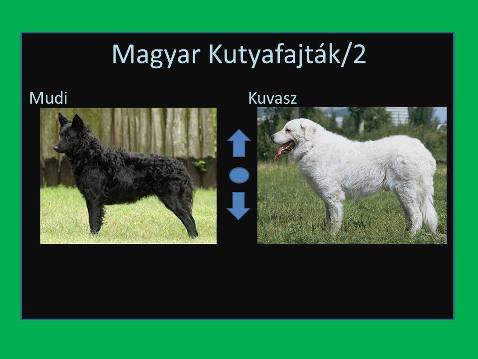 Magyar Kutyafajták/2 Mudi Kuvasz