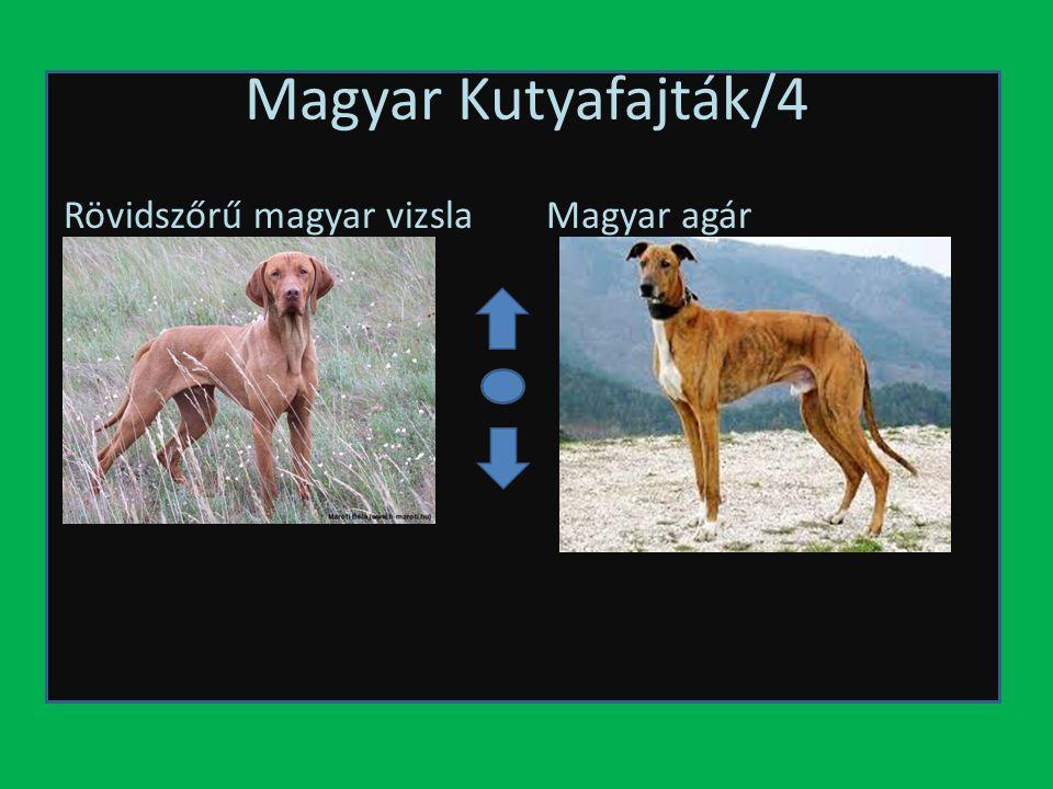 Magyar Kutyafajták/4 Rövidszőrű magyar vizsla Magyar agár