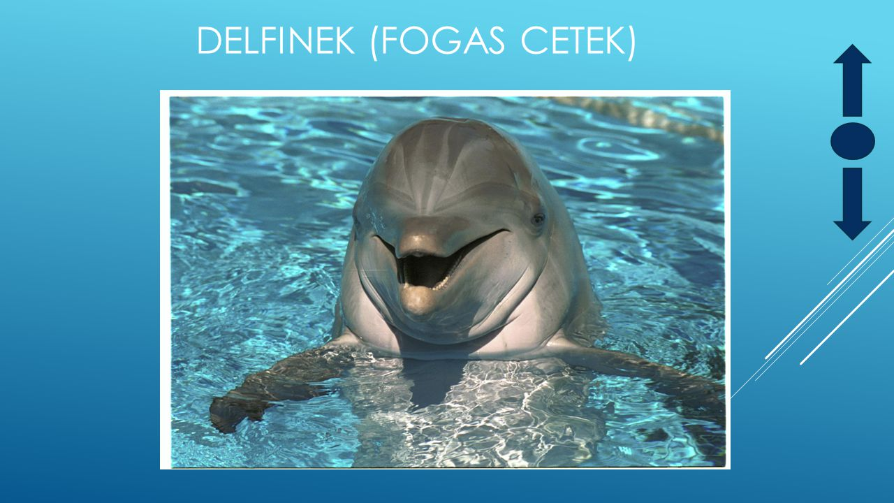 Delfinek (Fogas cetek)