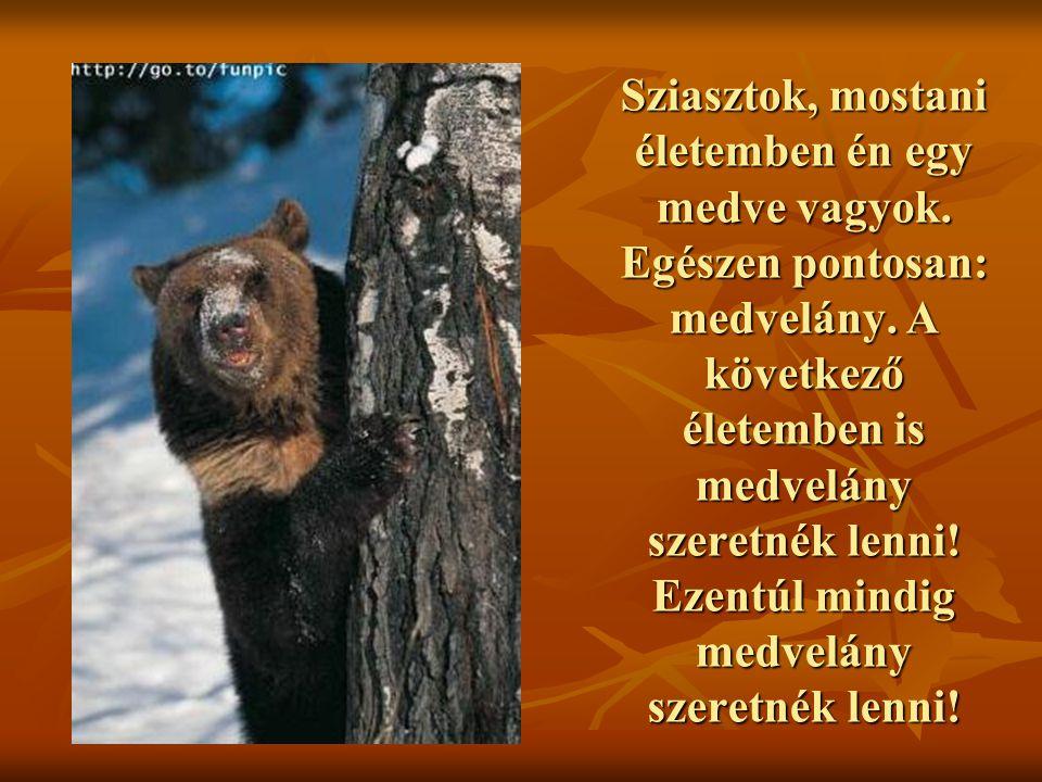 Sziasztok, mostani életemben én egy medve vagyok
