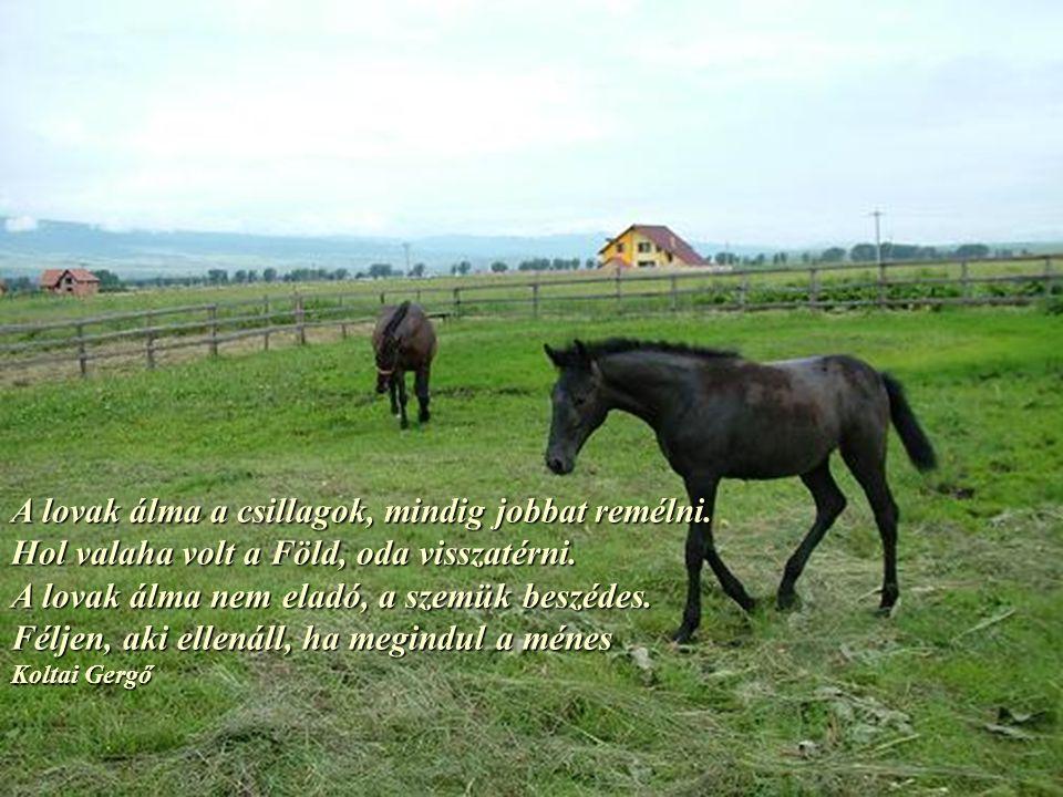 A lovak álma a csillagok, mindig jobbat remélni