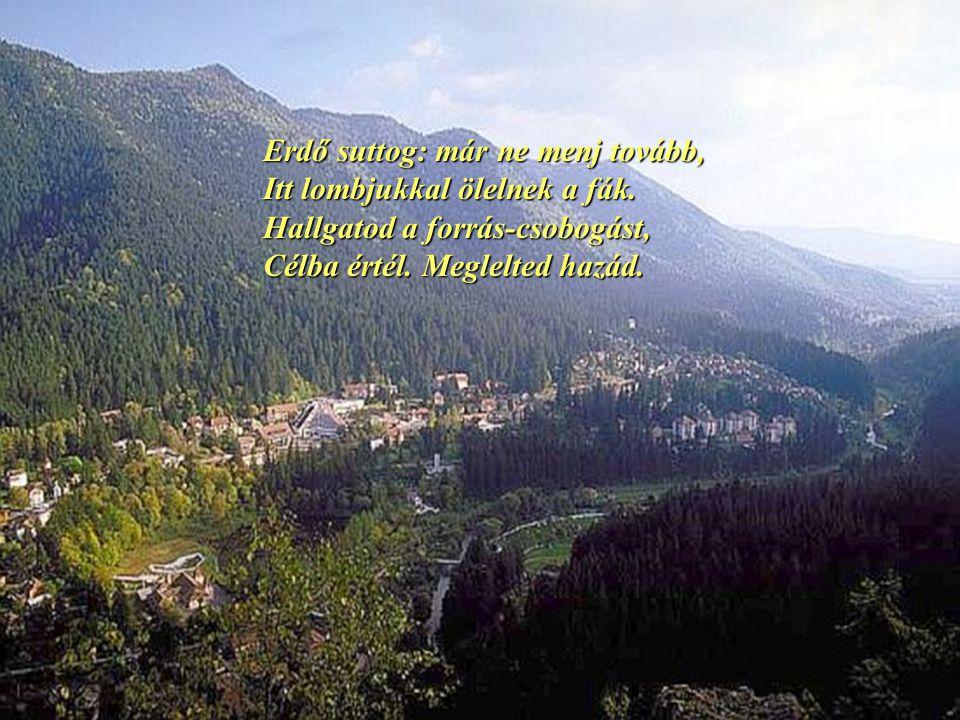 Erdő suttog: már ne menj tovább, Itt lombjukkal ölelnek a fák.