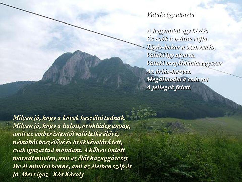 Valaki így akarta A hegyoldal egy ölelés. És csók a málna rajta. Tövis-bokor a szenvedés, Valaki így akarta.