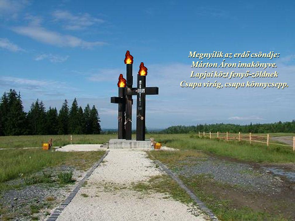 Megnyílik az erdő csöndje: Márton Áron imakönyve.