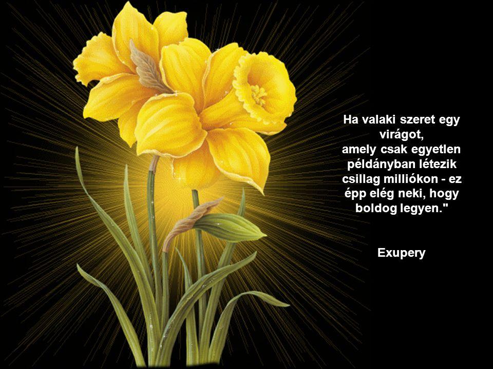 Ha valaki szeret egy virágot, amely csak egyetlen példányban létezik csillag milliókon - ez épp elég neki, hogy boldog legyen.