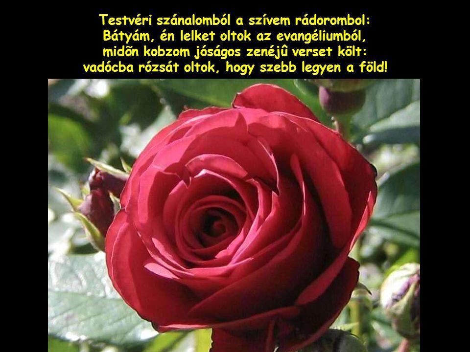 Testvéri szánalomból a szívem rádorombol: Bátyám, én lelket oltok az evangéliumból, midõn kobzom jóságos zenéjû verset költ: vadócba rózsát oltok, hogy szebb legyen a föld!