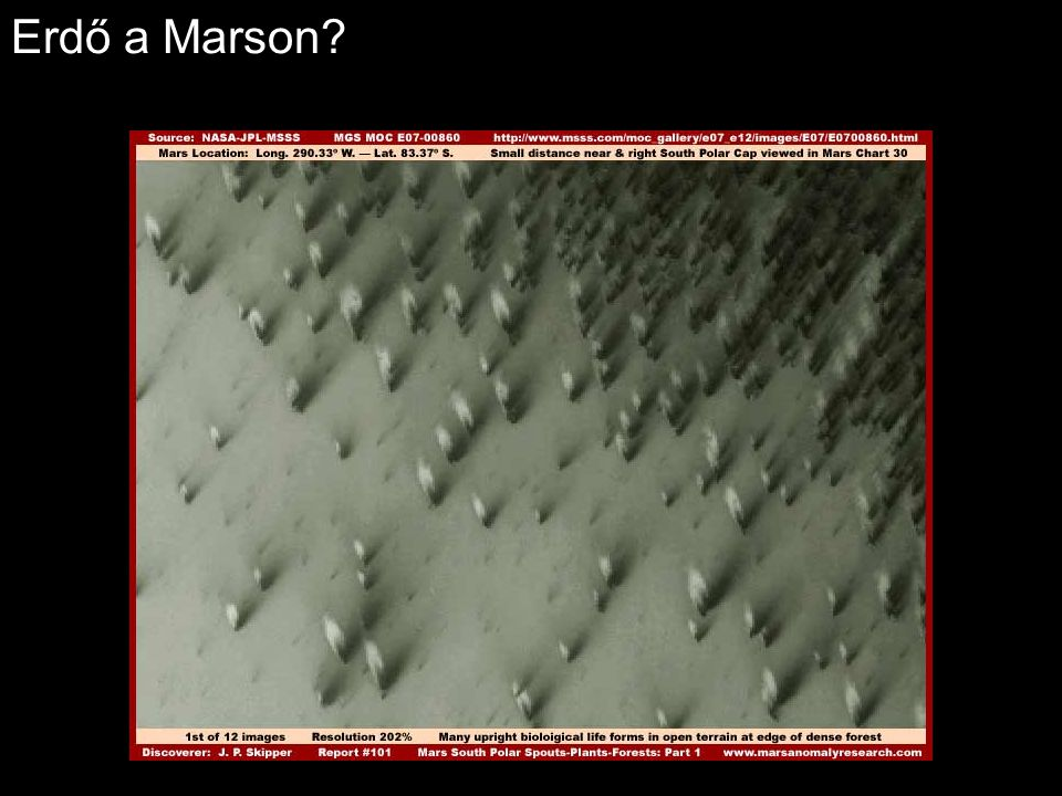 Erdő a Marson