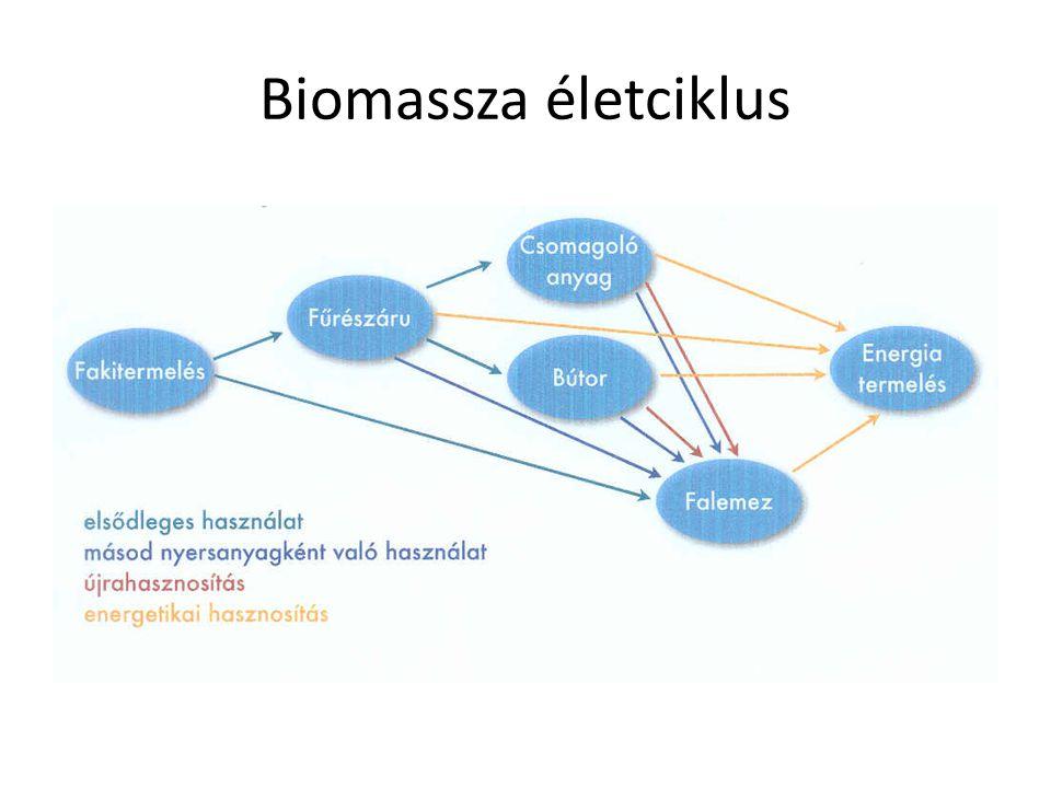 Biomassza életciklus