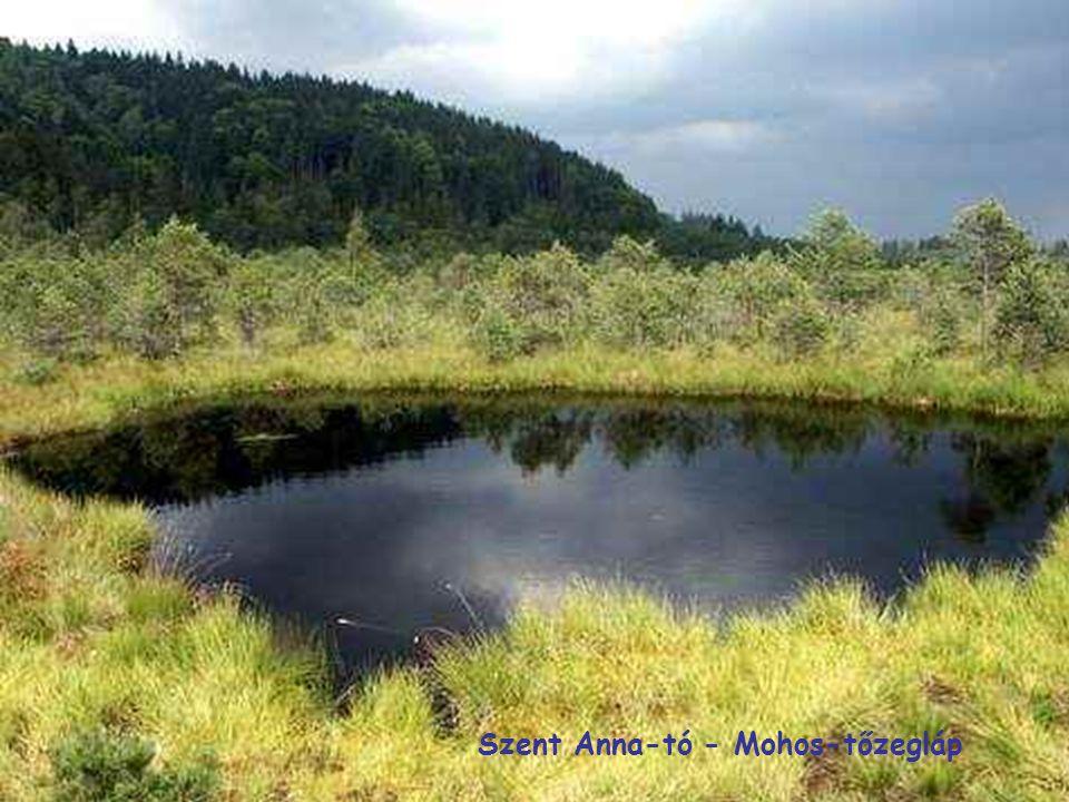 Szent Anna-tó - Mohos-tőzegláp
