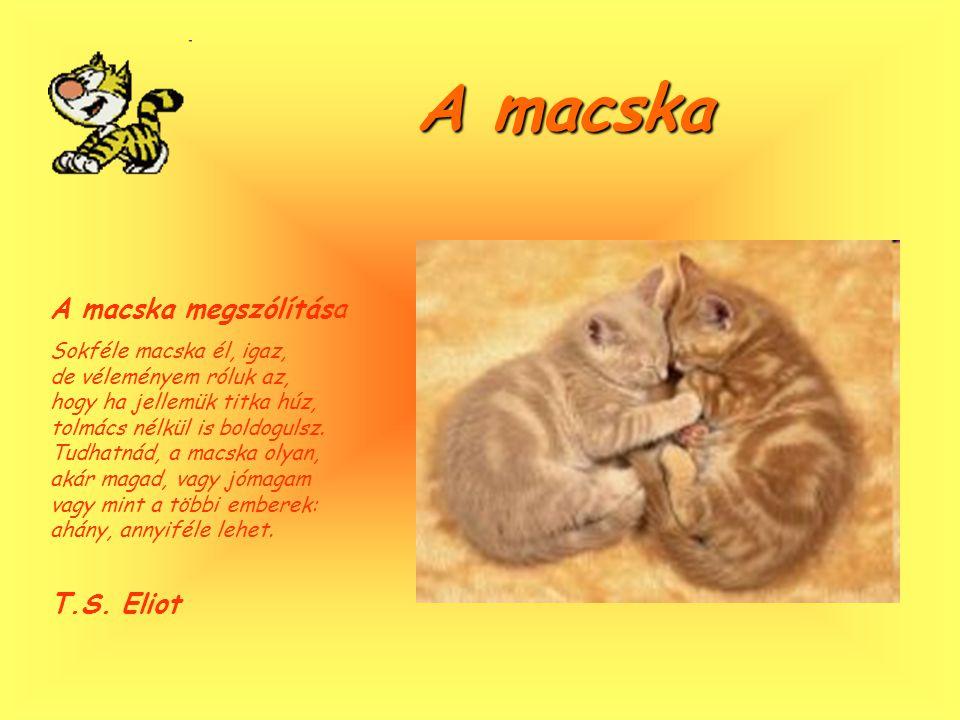 A macska A macska megszólítása