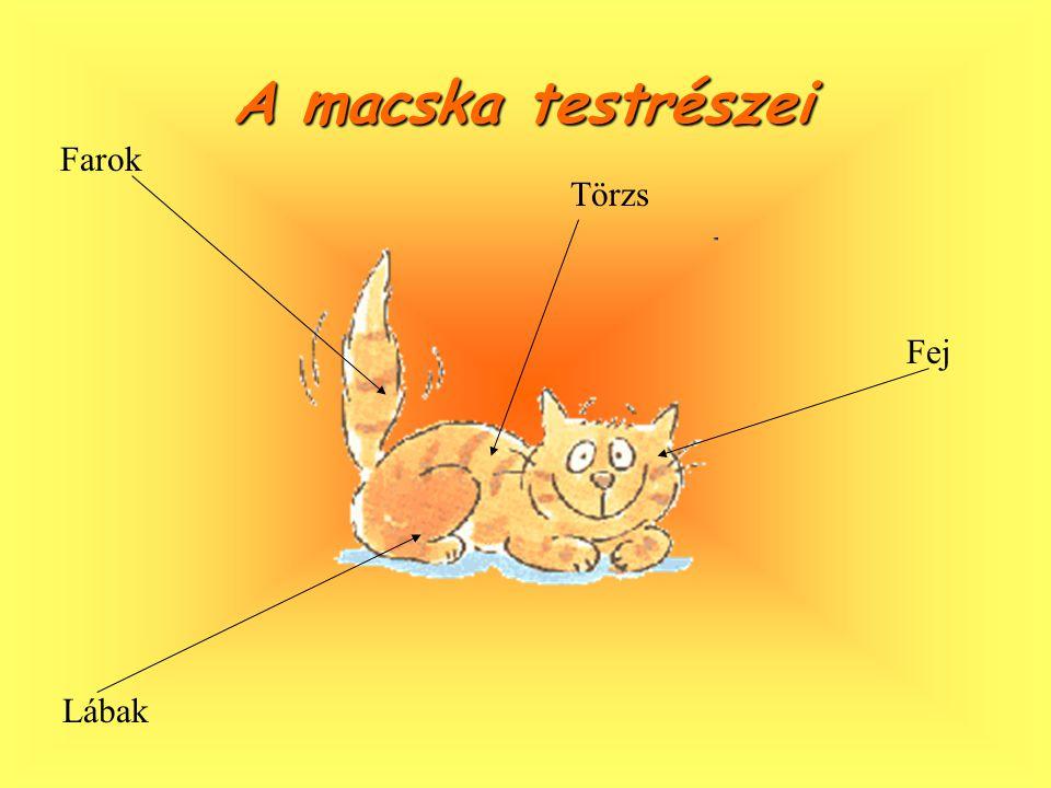 A macska testrészei Farok Törzs Fej Lábak