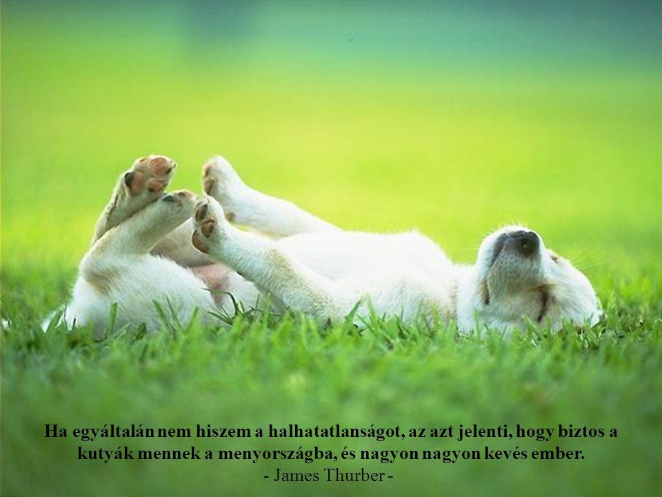 Ha egyáltalán nem hiszem a halhatatlanságot, az azt jelenti, hogy biztos a kutyák mennek a menyországba, és nagyon nagyon kevés ember.