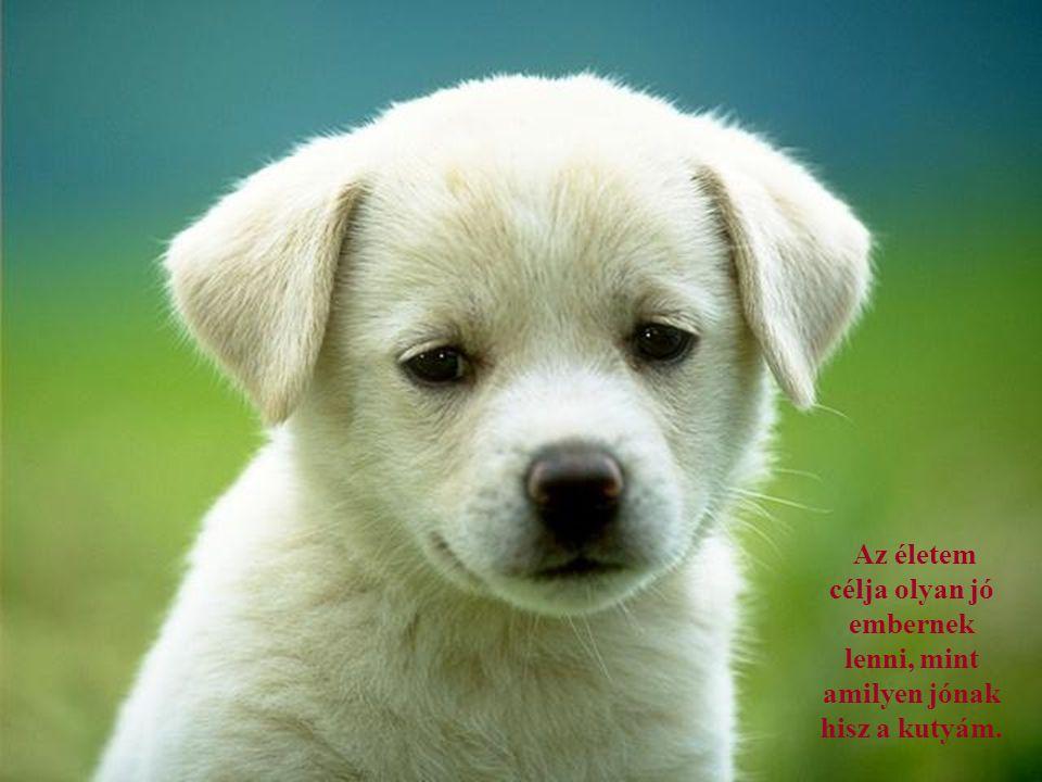 Az életem célja olyan jó embernek lenni, mint amilyen jónak hisz a kutyám.