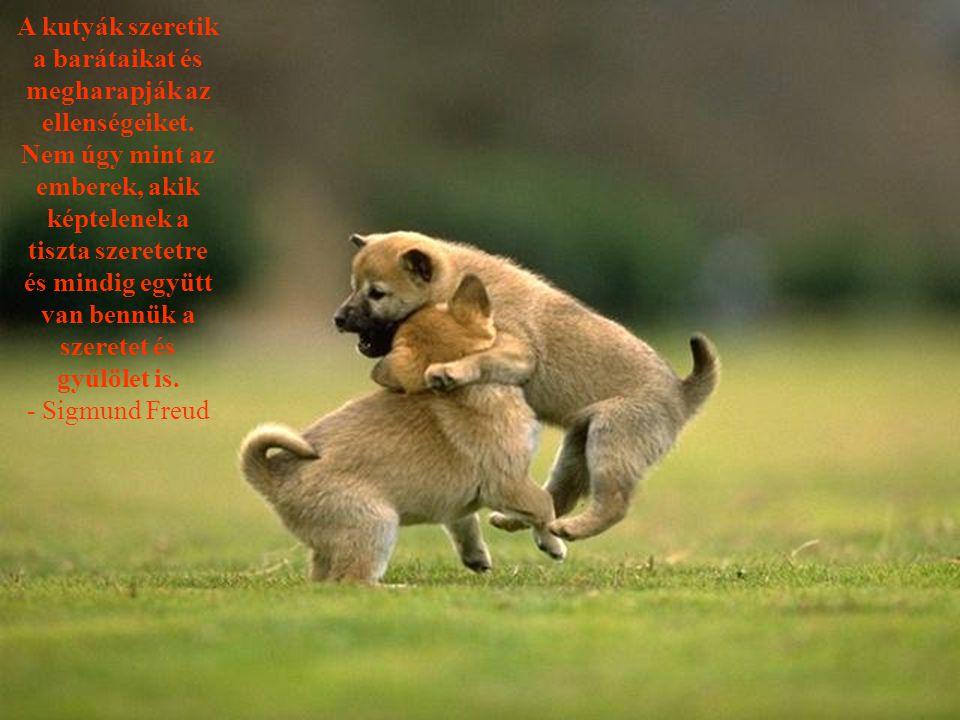 A kutyák szeretik a barátaikat és megharapják az ellenségeiket