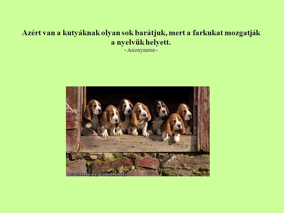 Azért van a kutyáknak olyan sok barátjuk, mert a farkukat mozgatják