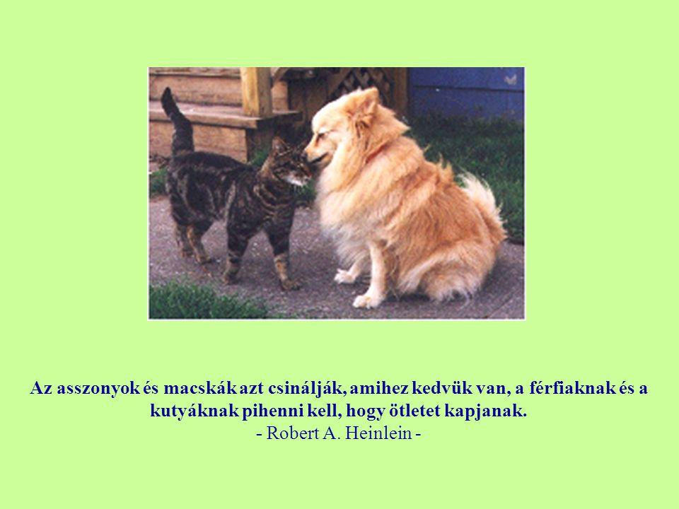 Az asszonyok és macskák azt csinálják, amihez kedvük van, a férfiaknak és a kutyáknak pihenni kell, hogy ötletet kapjanak.