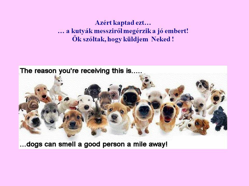 … a kutyák messziről megérzik a jó embert!