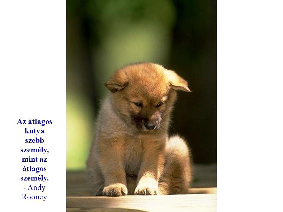 Az átlagos kutya szebb személy, mint az átlagos személy.