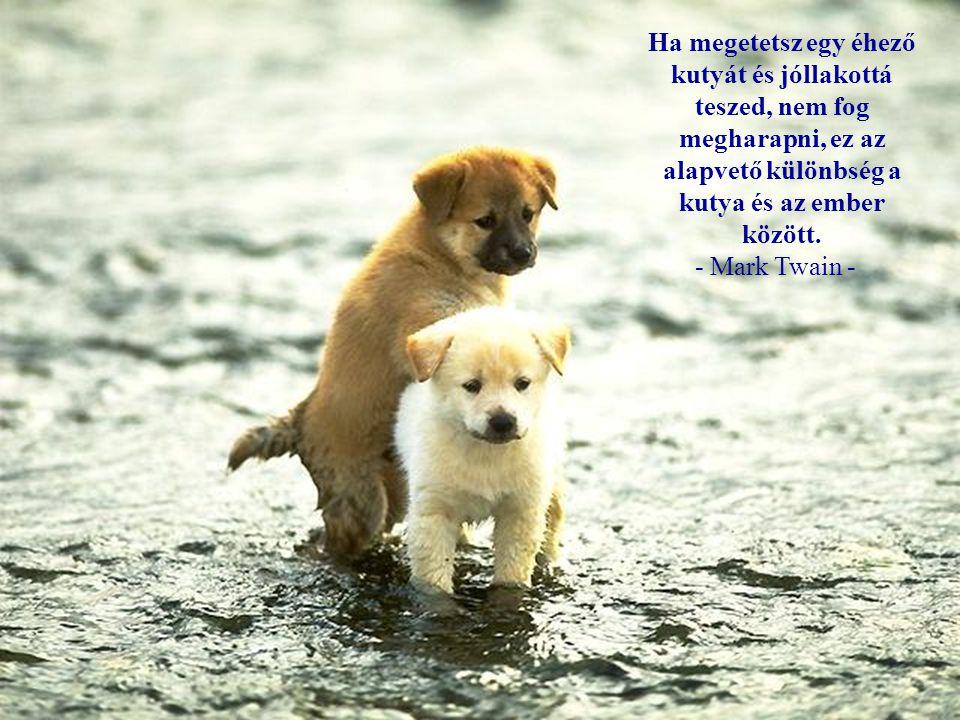 Ha megetetsz egy éhező kutyát és jóllakottá teszed, nem fog megharapni, ez az alapvető különbség a kutya és az ember között.