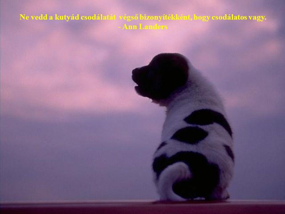 Ne vedd a kutyád csodálatát végső bizonyítékként, hogy csodálatos vagy.