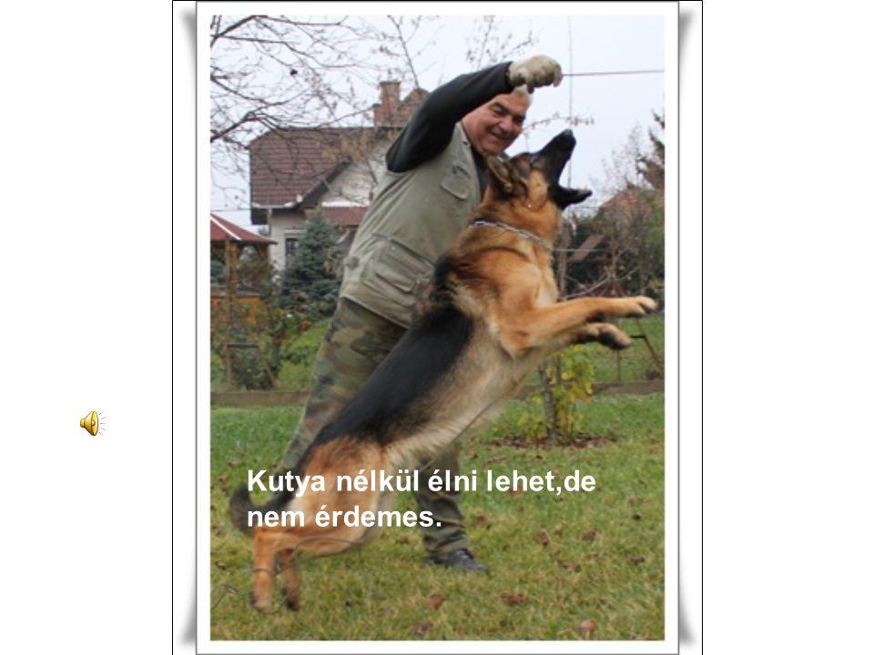 Kutya nélkül élni lehet,de nem érdemes.