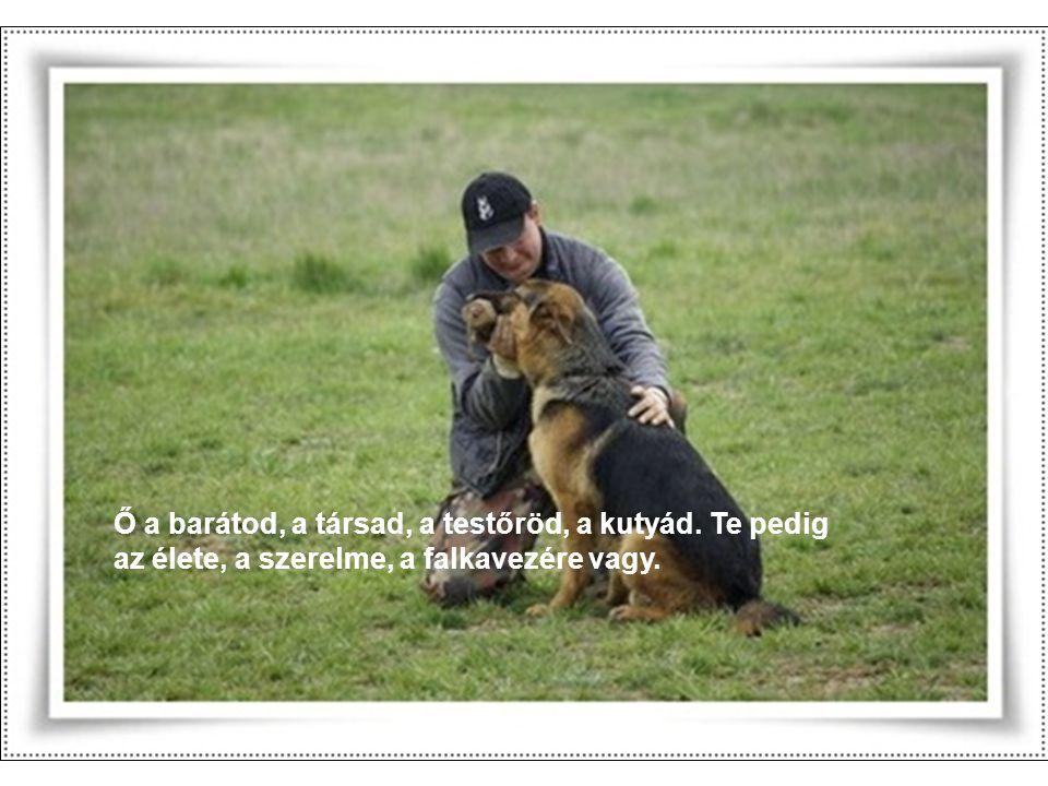 Ő a barátod, a társad, a testőröd, a kutyád