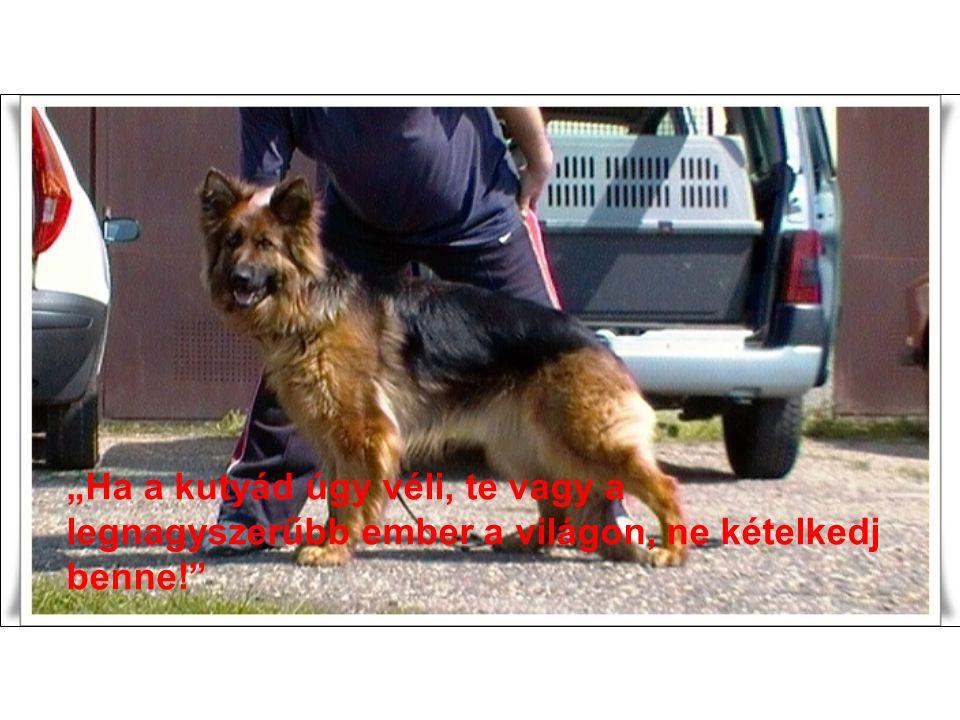 """""""Ha a kutyád úgy véli, te vagy a legnagyszerűbb ember a világon, ne kételkedj benne!"""