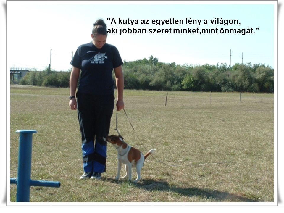 A kutya az egyetlen lény a világon,