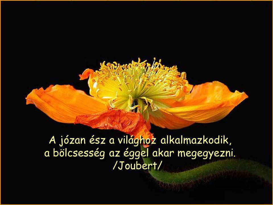 A józan ész a világhoz alkalmazkodik, a bölcsesség az éggel akar megegyezni. /Joubert/
