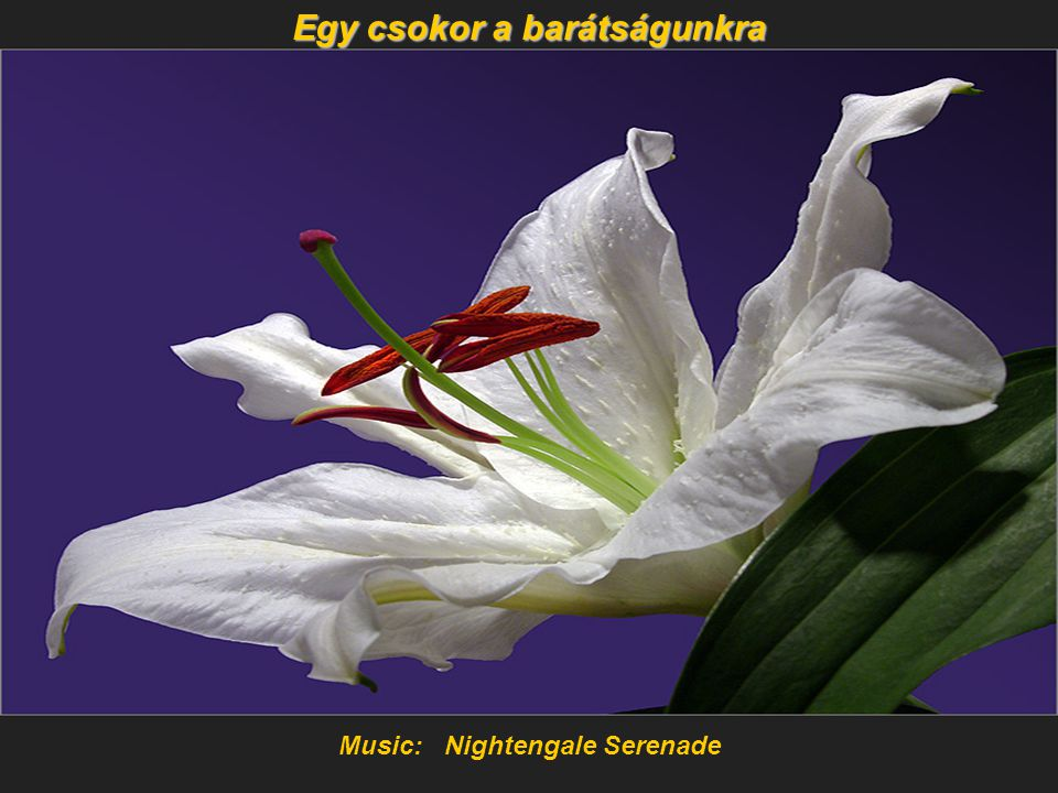 Egy csokor a barátságunkra Music: Nightengale Serenade