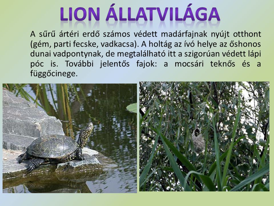 Lion Állatvilága