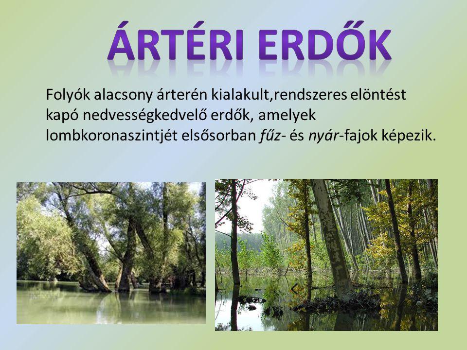 Ártéri erdők