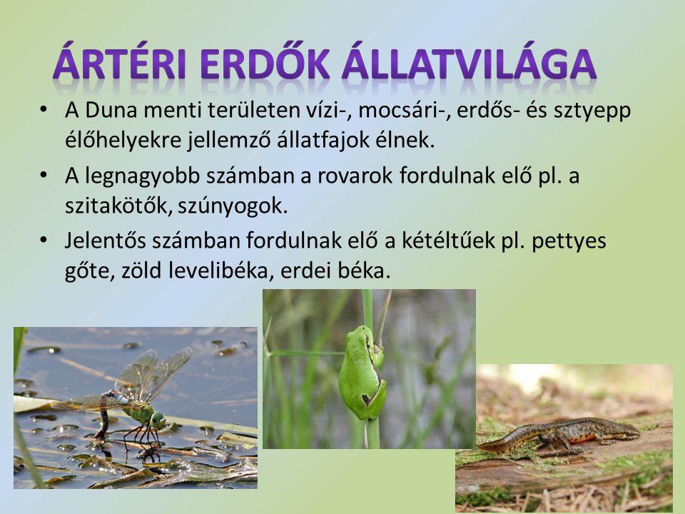 Ártéri erdők állatvilága