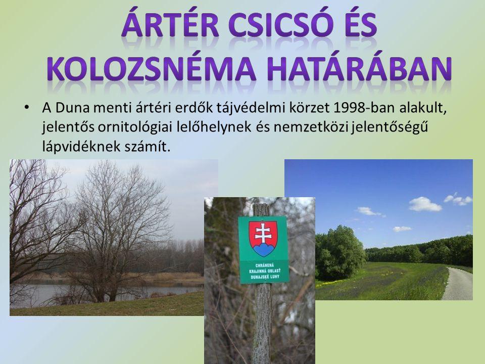Ártér Csicsó és Kolozsnéma határában