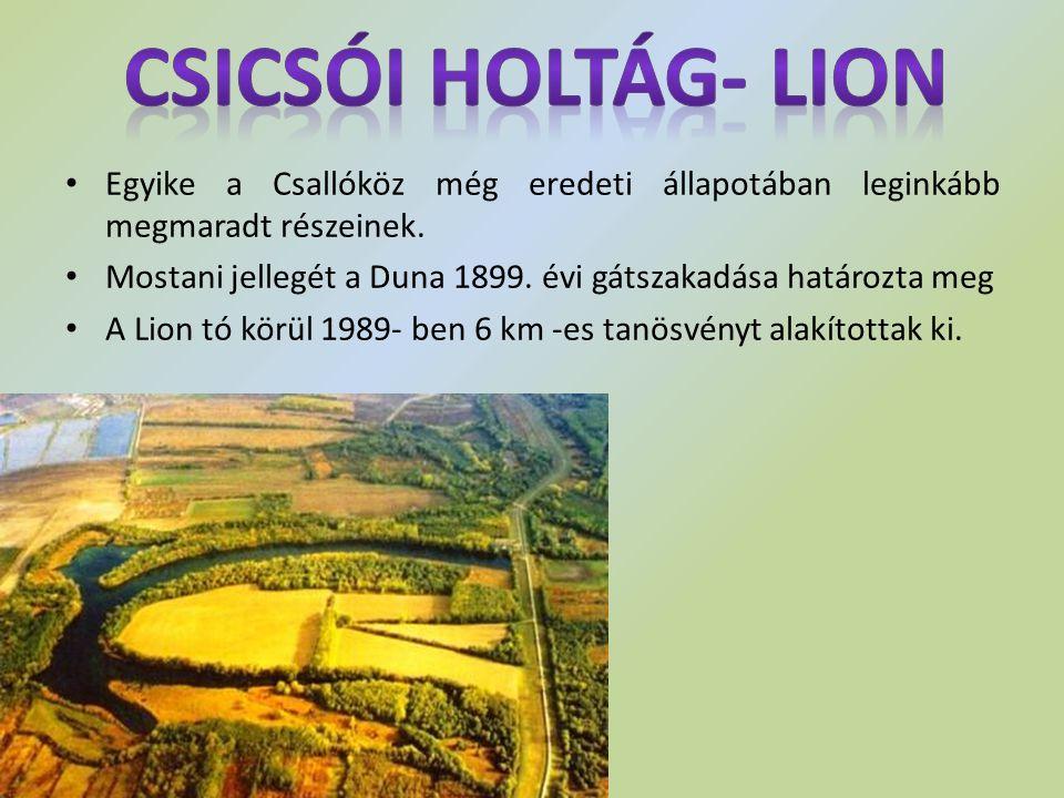 Csicsói holtág- Lion Egyike a Csallóköz még eredeti állapotában leginkább megmaradt részeinek.