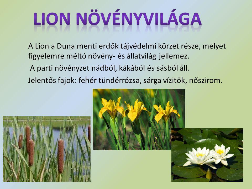 Lion növényvilága A Lion a Duna menti erdők tájvédelmi körzet része, melyet figyelemre méltó növény- és állatvilág jellemez.