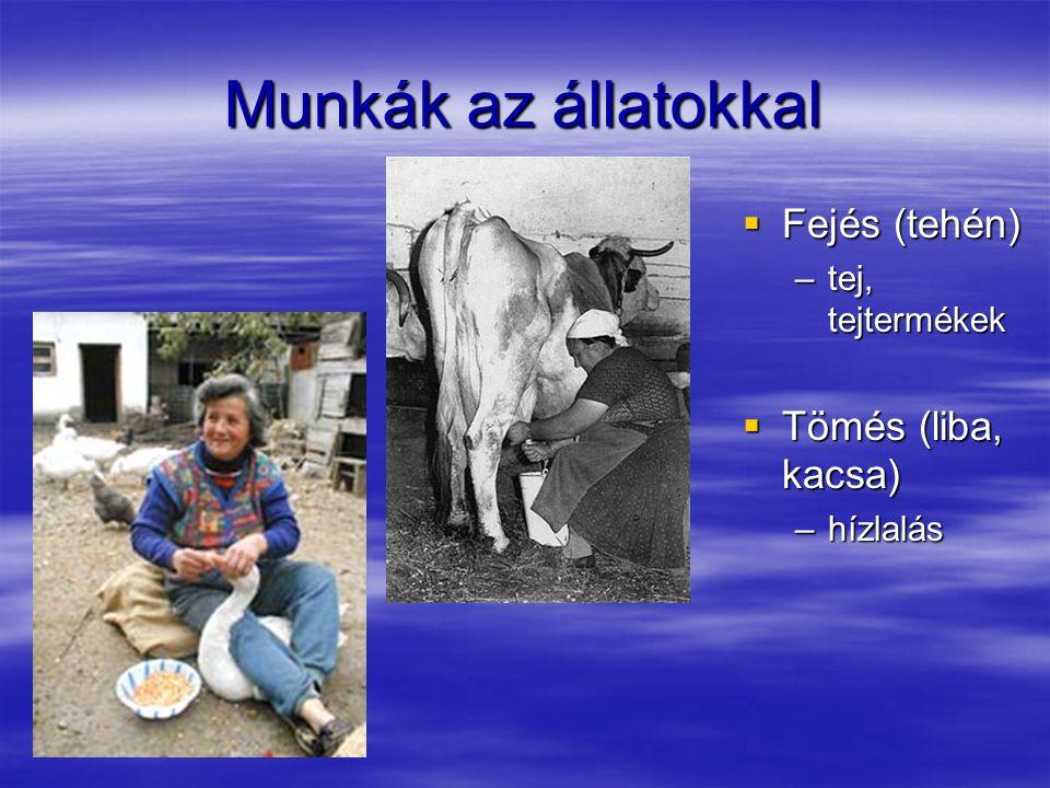 Munkák az állatokkal Fejés (tehén) Tömés (liba, kacsa)