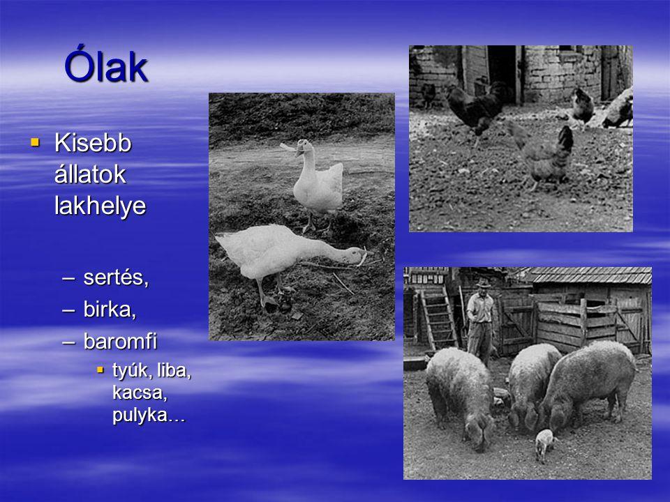 Ólak Kisebb állatok lakhelye sertés, birka, baromfi