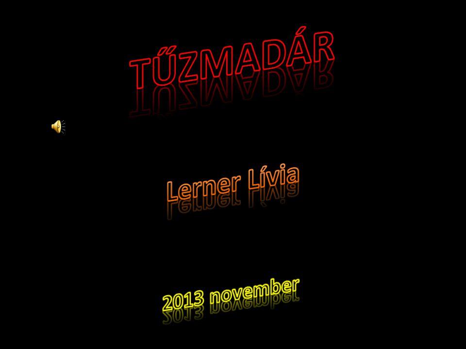 TŰZMADÁR Lerner Lívia 2013 november