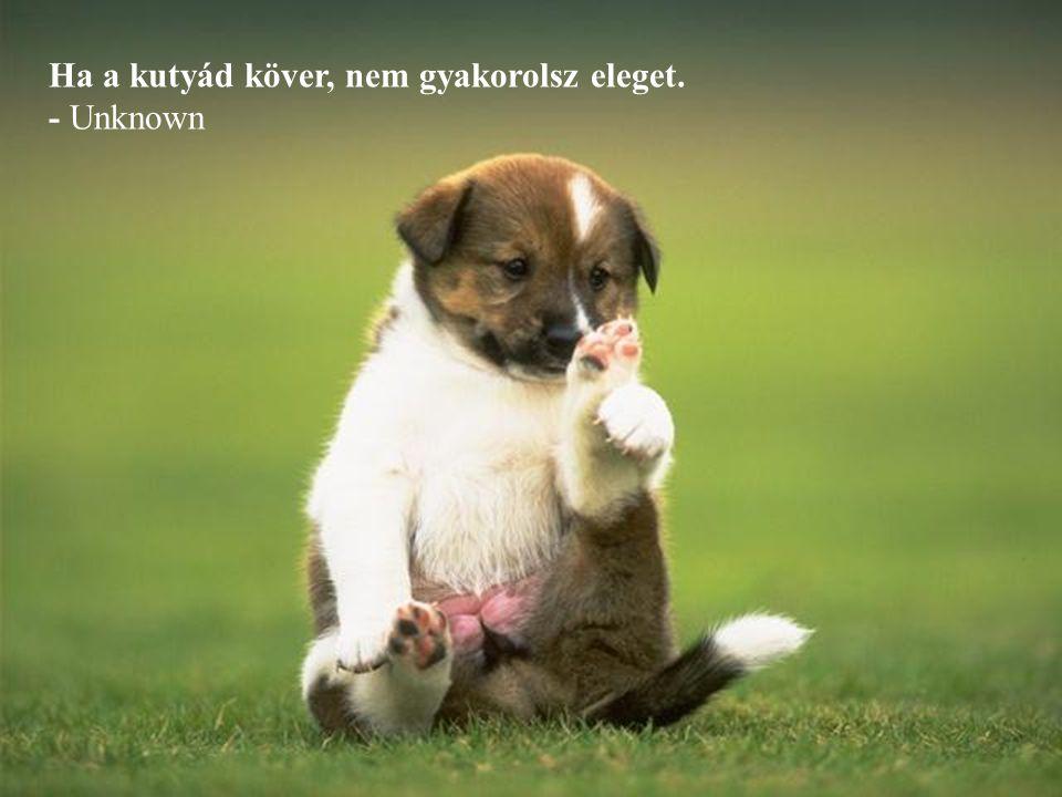 Ha a kutyád köver, nem gyakorolsz eleget.