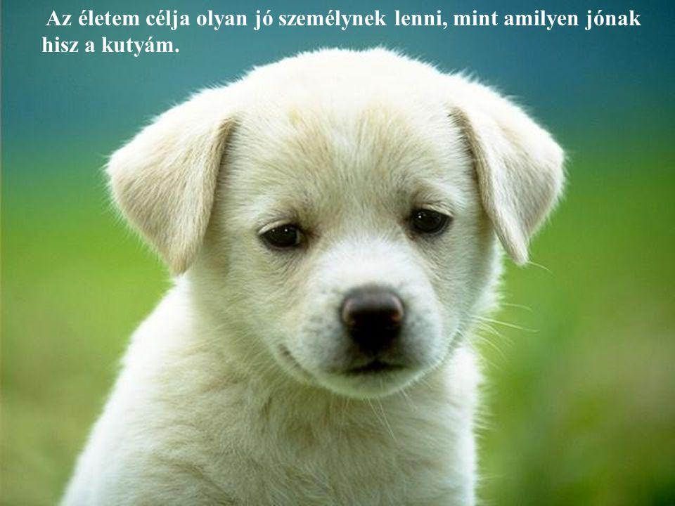 Az életem célja olyan jó személynek lenni, mint amilyen jónak hisz a kutyám.
