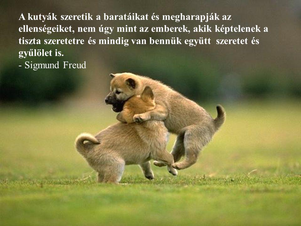 A kutyák szeretik a baratáikat és megharapják az ellenségeiket, nem úgy mint az emberek, akik képtelenek a tiszta szeretetre és mindig van bennük együtt szeretet és gyűlölet is.