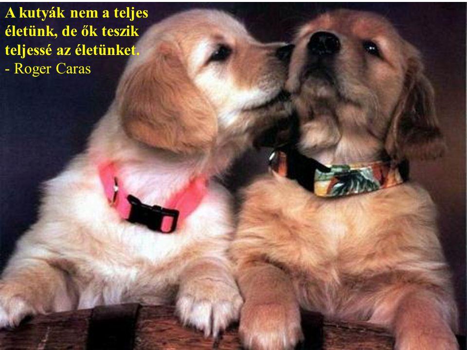 A kutyák nem a teljes életünk, de ők teszik teljessé az életünket.