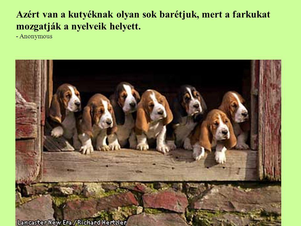 Azért van a kutyéknak olyan sok barétjuk, mert a farkukat mozgatják a nyelveik helyett.