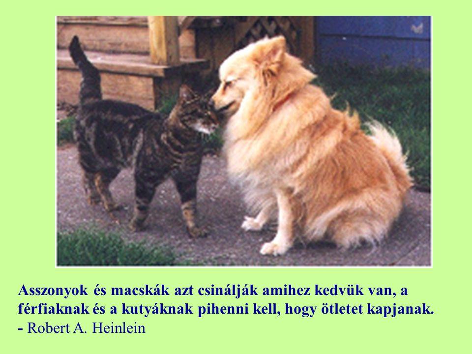 Asszonyok és macskák azt csinálják amihez kedvük van, a férfiaknak és a kutyáknak pihenni kell, hogy ötletet kapjanak.