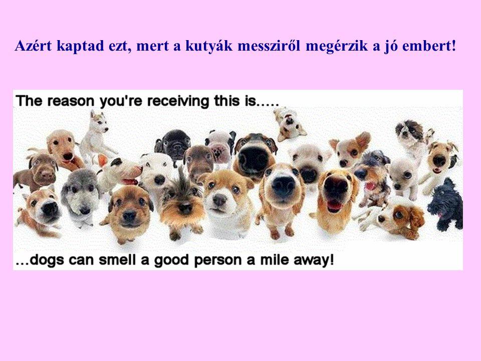 Azért kaptad ezt, mert a kutyák messziről megérzik a jó embert!