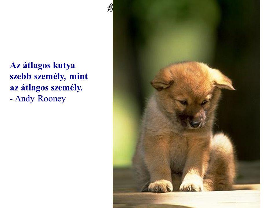 你默默的回首 Az átlagos kutya szebb személy, mint az átlagos személy. - Andy Rooney